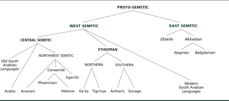 [صورة مرفقة: semitic-tree.jpg]